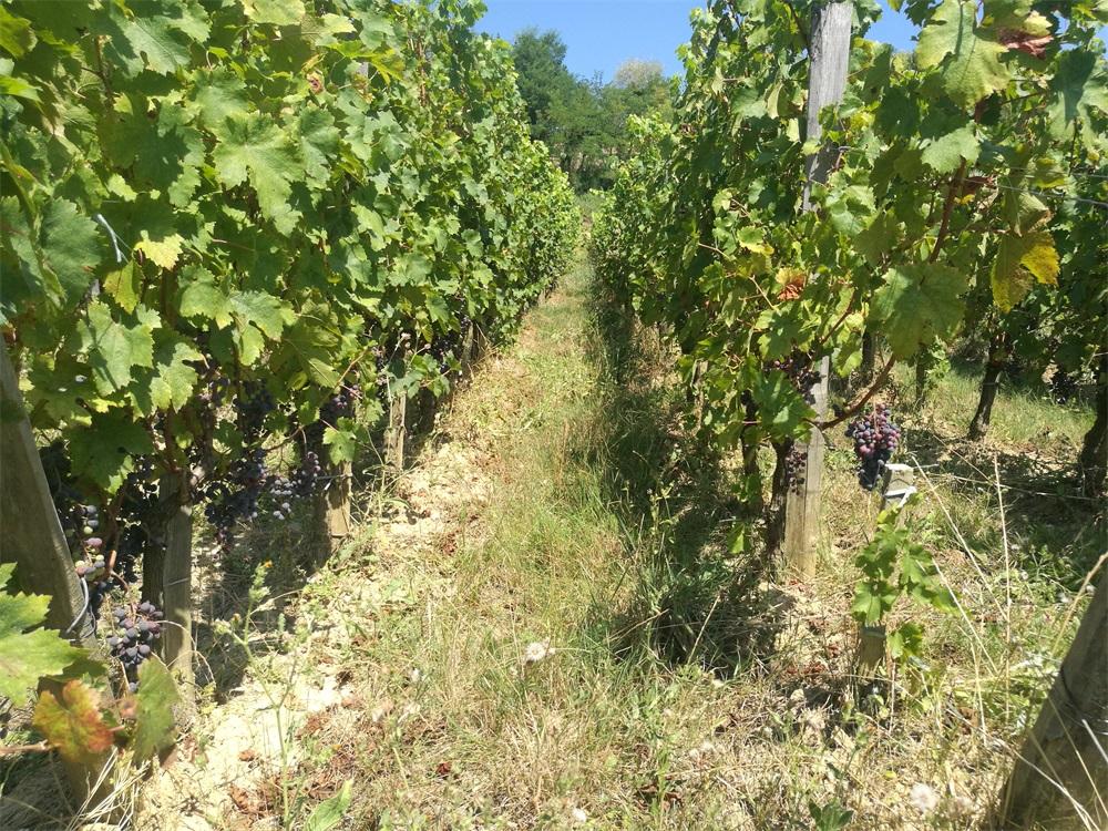 国内法国红酒生意有没有市场