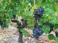 投资法国红酒生意利润怎样